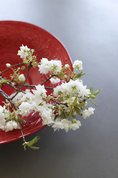 How To Decorate With Flowering Branches Decorating Lonny