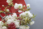 A kitchen vignette of white-flowered stems in a red bowl