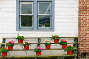 Potted blooms in front of a country home