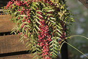 A detail of berries atop a rustic wooden basket.