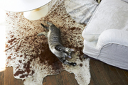 A cat on a cowhide rug