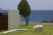 A sheep statue on the grounds of the Trident Hotel