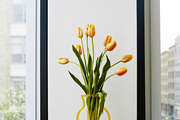 Tulips in a lucite vase at the home of Jordana Brewster
