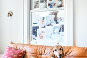 A golden retriever feels at home in this living space.