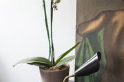 An orchid and modern lamp atop a credenza