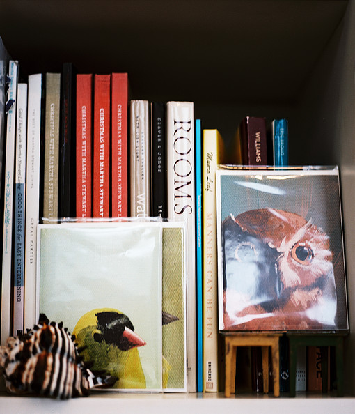 Bookshelf - Images of birds leaning against a shelf of books