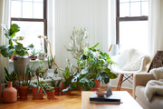 A bohemian living room full of plants.