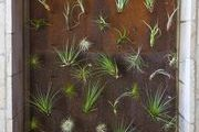 A wall installation composed of tillandsias (air plants) at Napa Valley's Bardessono hotel