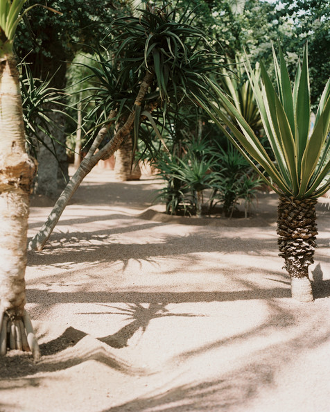 Palm tree landscape photos design ideas remodel and