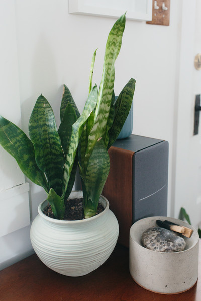 Potted Plant Photos (1 of 58)