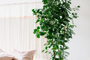 A large plant at the side of a bed adds life to the space.