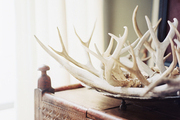A collection of antlers
