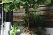 Variety of potted plants outside an entryway.