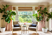 Fiddle-leaf fig trees on either side of a pair of chairs