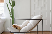 A modern accent chair with a petal frame, cushions, and a dog sleeping on it.
