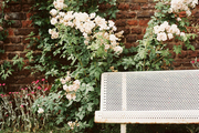 A metal bench against a brick wall lined with rosebushes