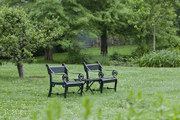 Two outdoor chairs in a garden area