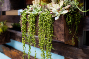 A vertical succulent wall made of reclaimed wood from shipping pallets at Jessica Alba's Honest Company office