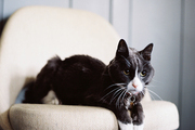 A cat rests on a beige midcentury chair