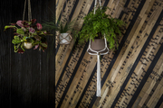 Patterned wood wall behind small hanging plants.