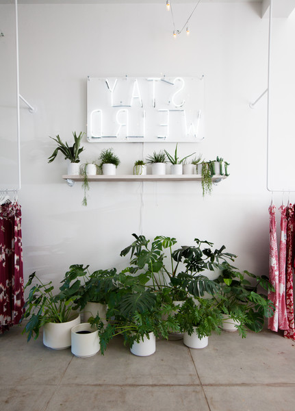 Potted Plants Photos (4 of 98)