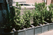 Potted plants surrounding an air-conditioning unit