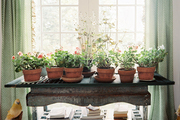 A grouping of potted plants flanked by green patterned curtains