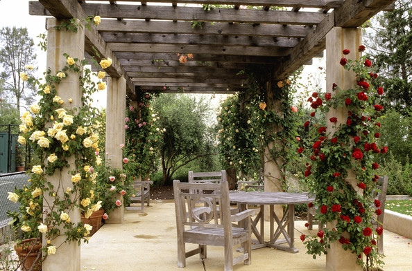 Climbing Roses Photos (1 Of 1). Country Traditional Patio