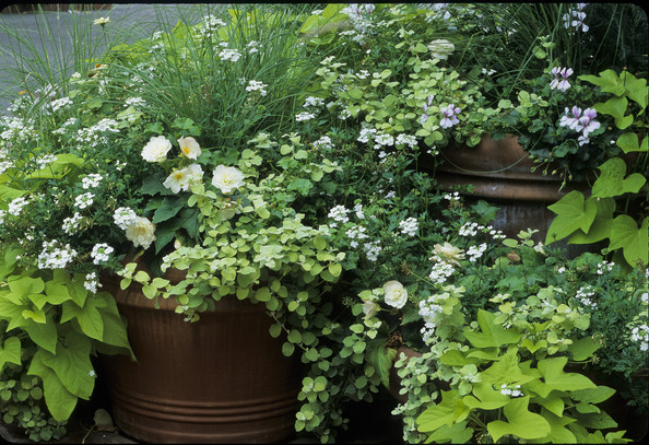 Garden Container Photos (5 of 43) []