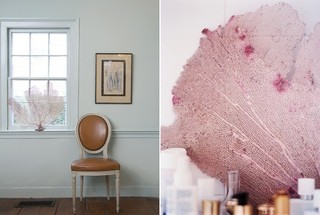 Unexpectedly Elegant Decor: Sea Fans