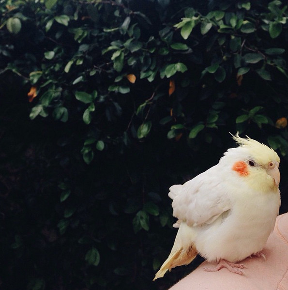 The Fine-Feathered Friend