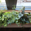 If You Have a Window Sill
