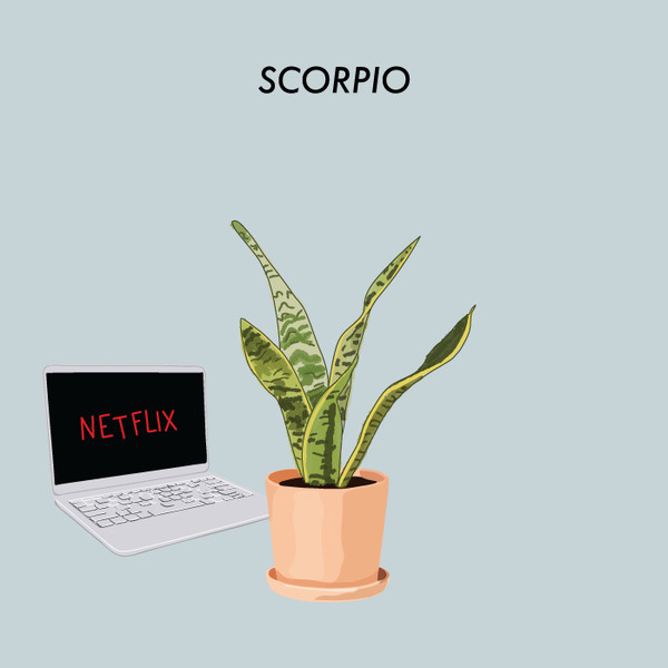 Scorpio: Snake Plant - The Best Houseplant For You Based On ... on