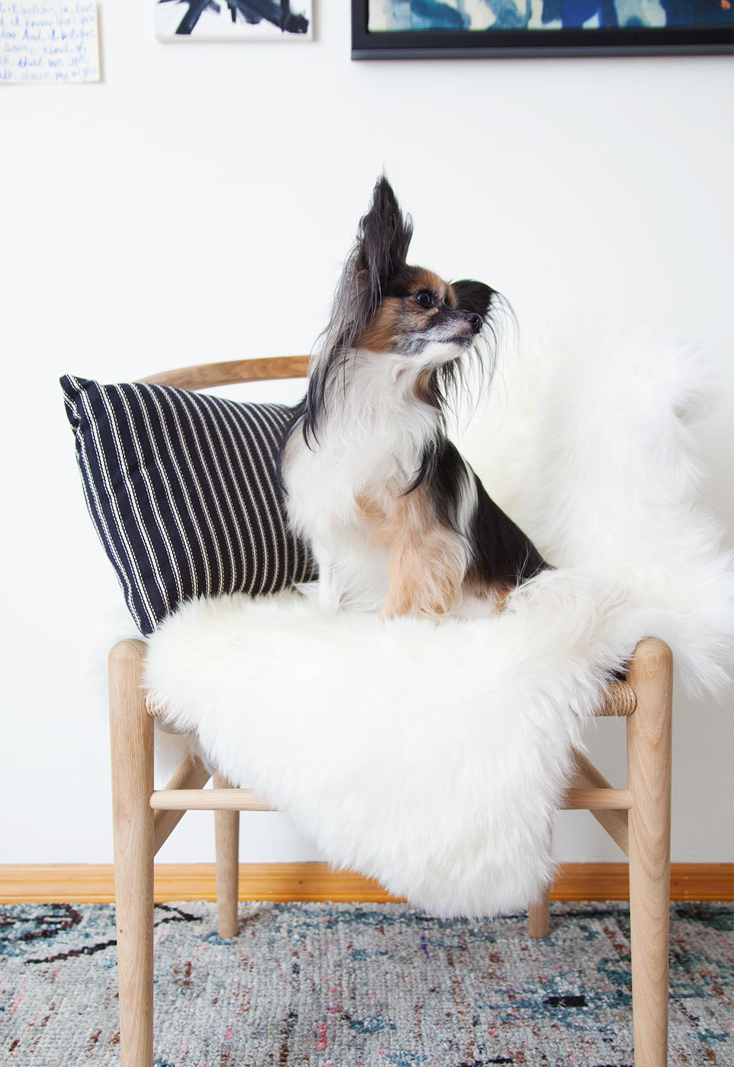 Dash's nine-year-old papillon Lulu Dash-Mapes gets comfortable on a shearling-topped Hans Wegner Wishbone chair.