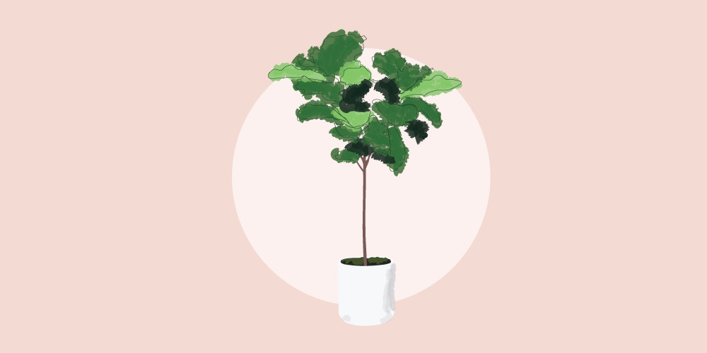 The Lonny Guide To Healthy Houseplants