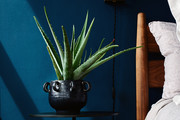 How Do I Care For An Aloe Vera Plant — Everyone Needs This Trendy Succulent