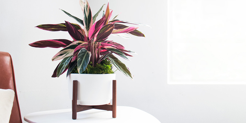 You Can Get Luxury Houseplants Delivered To Your Front Door