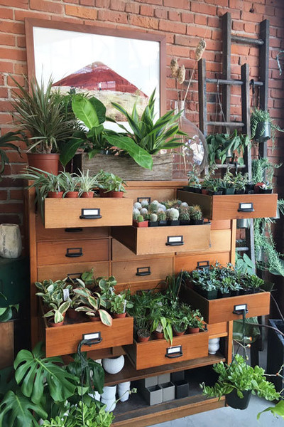 Glasswing's Succulent Drawers