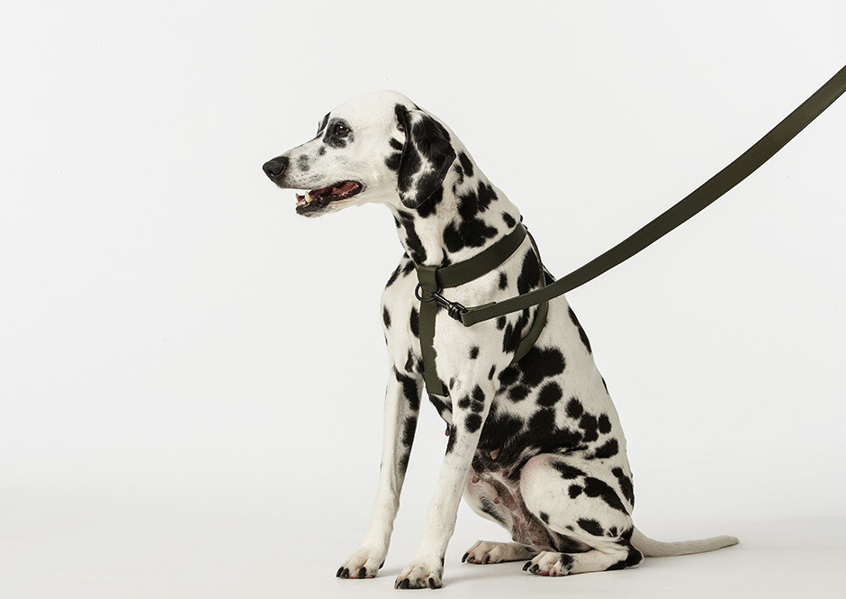 Is This The Most Stylish Pet Brand Ever?