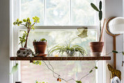 Tips For Growing Indoor Gardens In Small City Homes