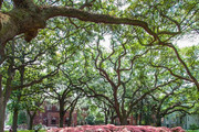 Why Savannah Needs To Be Your Next Design Destination