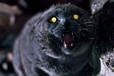 A Terrifying 'Pet Sematary' Remake Is Really Happening
