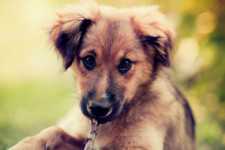 30 Popular Dog Names That Are Perfect For Your New Pet