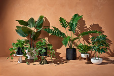 Hilton Carter's Faux Plants For Target Are Really Good